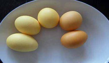 Sarı ve Beyaz Yumurta Arasındaki Farklar