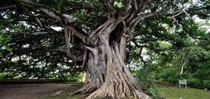 Ağacını Kesenlerden İntikam Alan Yaşlı Adamın Hikâyesi