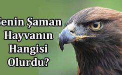 Senin Şaman Hayvanın Hangisi Olurdu?